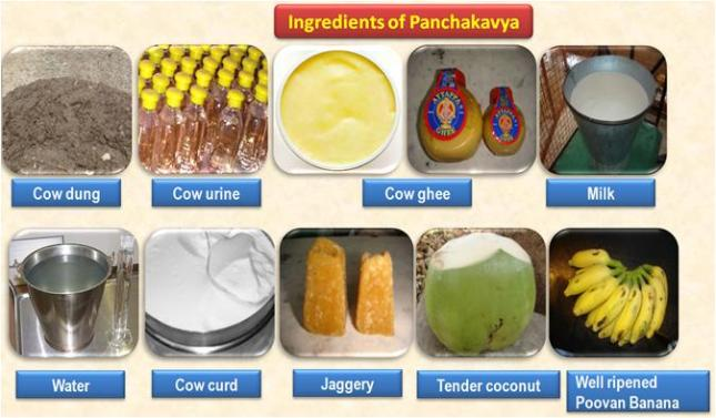 ingredients PANCHAKAVYA